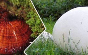 Jarní sadba hub - pýchavka obrovská nebo lesklokorka lesklá. Sasaďte si houby, kde jen chcete.
