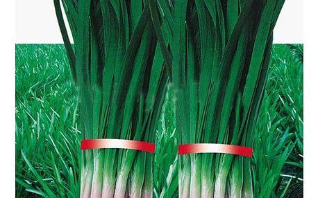 Fialový pórek - 100 semínek v balení