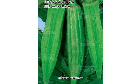Jedlý ibišek (okra) - balení 30 semen a poštovné ZDARMA s dodáním do 3 dnů! - 9999917268