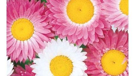 Smilek růžový - balení 100 semínek - dodání do 2 dnů
