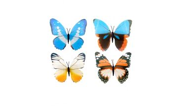 4 půvabní svítící motýlci a poštovné ZDARMA! - 9999921458