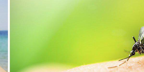 Repelentní náramky proti komárům - v balení 20 kusů v různých barvách. Už žádné štípance od komárů.