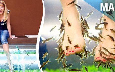 Rybičky Garra rufa v salonu Massage Point