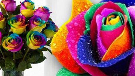 Duhové růže pro pěstování doma i venku! Poštovné je v ceně.