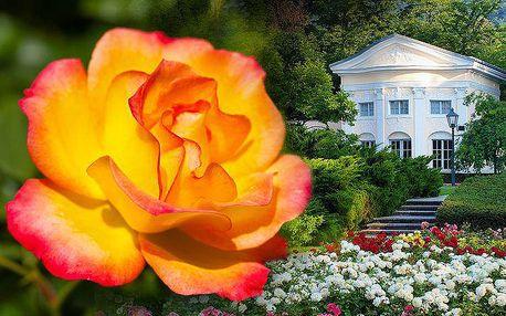 Výlet na Slavnost růží a zámek Schönbrunn v Rakousku pro 1 osobu