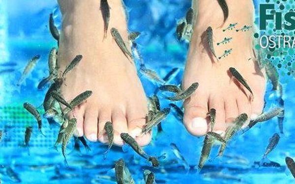 Koupel nohou či celého těla s rybkami Garra rufa