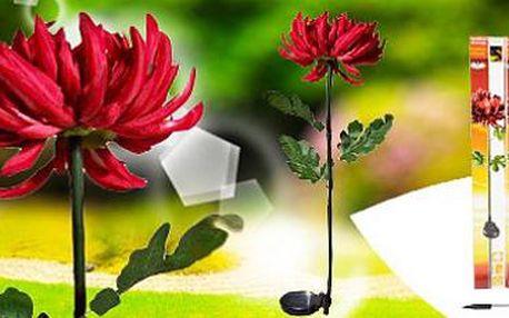 2 solární květiny: stylová jarní dekorace!