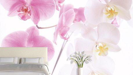 Tapeta Orchidej 400x280 cm