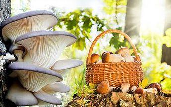 2 balení 8 druhů LESNÍCH HUB vč. poštovného! Těšte se na sklizeň hub přímo z Vaší zahrádky!