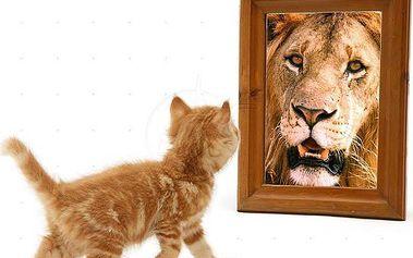 """Sebevědomí - nestůjte v cestě sám sobě"""" (28.5.)"""