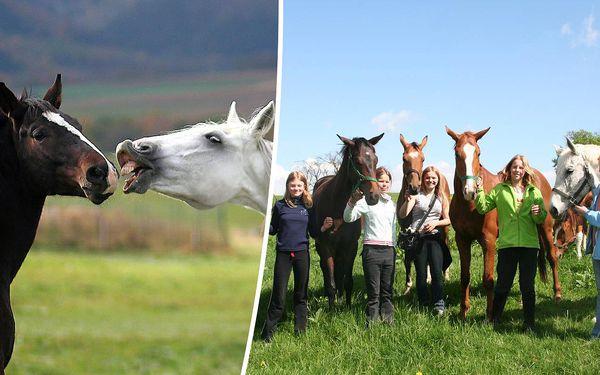 3 dny plné zážitků v koňském sedle pro vaše děti - Farma Vysoká - Chrastava