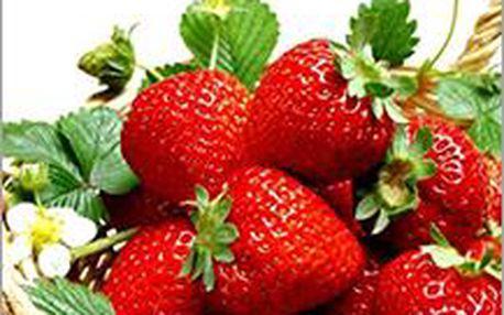 Jahody - 200 semínek