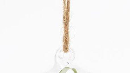Terárium s rostlinami Epiphyte
