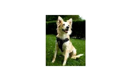 Trixie Dog Protect postroj do auta, S–M: 40–55 cm/20 mm