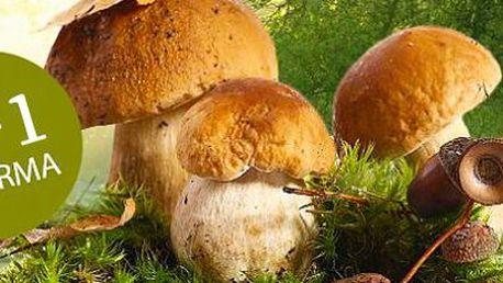 3+1 balení pěstebního mixu 8 druhů hub: Vypěstujte si vlastní lahodné houby!