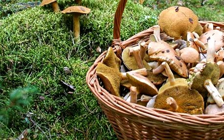 Pěstitelská sada 8 druhů hub 10 g