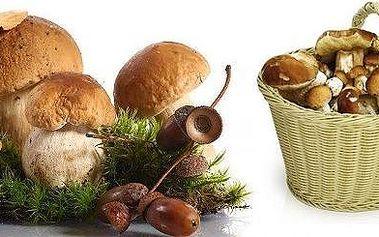 Vypěstujte si vlastní houby! Akce 1 + 1 Zdarma. Dvě sadby pěstebního mixu osmi druhů lesních hub. Na houby už nemusíte chodit do lesa!