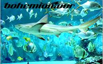 Podmořský svět na dlani