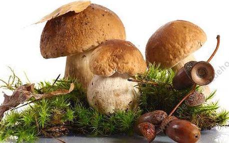 Pěstební mix 8 druhů lesních hub 2+1 sada ZDARMA