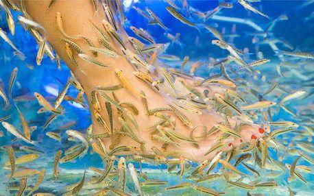 Blahodárná lázeň nohou s rybičkami Garra Rufa v salonu Massage Point v Plzni