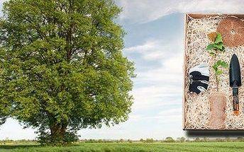 Zasaď strom - originální dárek nejen pro novopečené tatínky