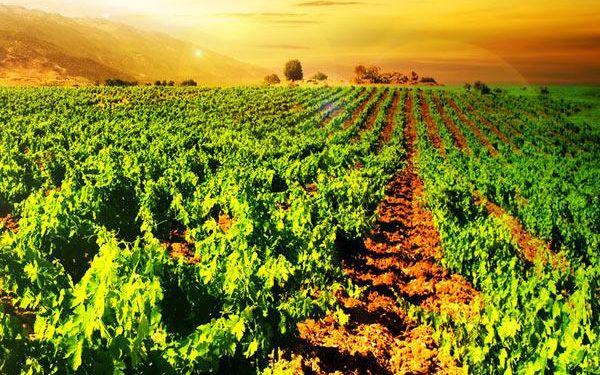 Skvělý oddech na jižní Moravě s polopenzí a vínem!