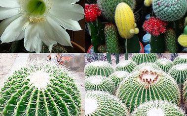 Semínka 10 ks kaktusů - různé druhy
