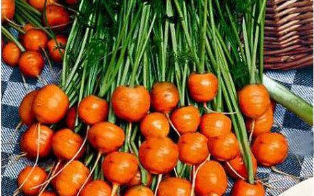 Semínka - malá kulatá mrkev