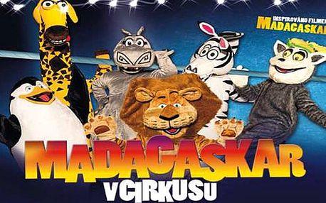 Cirkus Jo-Joo - vstupenky na novou show Madagaskar + děti do 3 let ZDARMA!