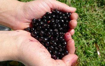 Acai berry 100 tablet!