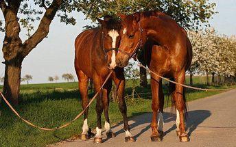 Krásná hodinová projížďka přírodou na koni pro 2 osoby i s vodičem