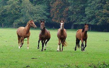 Dovolená s projížďkou na koni pro 2 na Slovensku