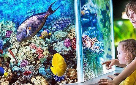Mořský svět – zábava pro celou rodinu