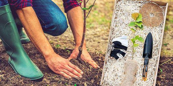 Zasaď strom - originální dárek nejen pro…