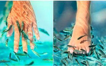 Rybí pedikúra Garra Rufa!