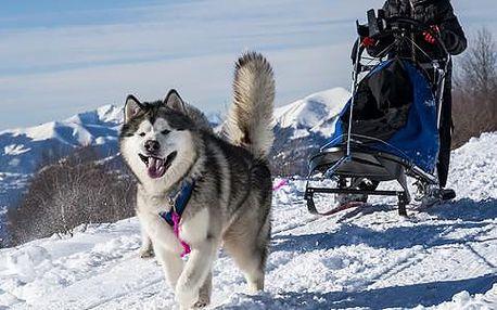 Zážitková jízda na psím spřežení v malebné šumavské přírodě