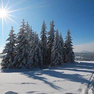 Až pět dní na Lipně + výhled z korun stromů