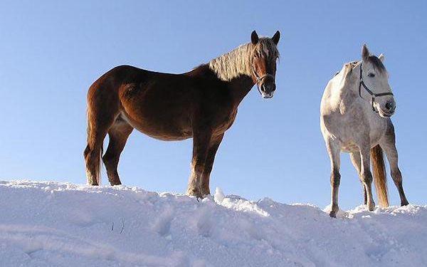 Zimní romantika na farmě s pronájmem koně pro dva