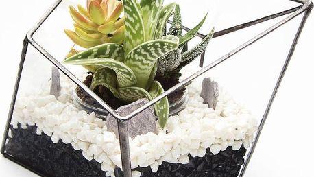 Terárium s rostlinami Diamond