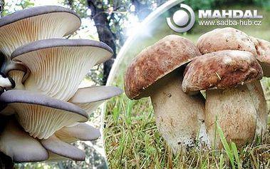 Sadba 8 druhů lesních hub - 2x 10 g včetně poštovného! Zasaďte pod stromeček a na jaře přesaďte ven!