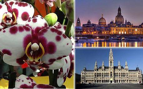 Zájezd na největší výstavu orchidejí v Drážďanech či Vídni včetně komentované prohlídky architektonických skvostů a památek
