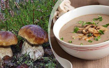 Sadbalesních hub (dvě balení) - za jedinečnou cenu! Vysaďte si na zahrádce či v květináči své vlastní houby! Výsadba je jednoduchá a díky přiloženému návodu ji zvládne každý!