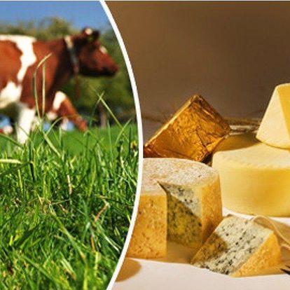 Kurz na domácí výrobu sýrů a mléčných výrobků