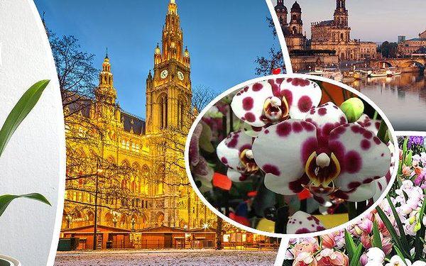 Největší výstavy orchidejí v Rakousku s návštěvou Vídně nebo Německu v Drážďanech.