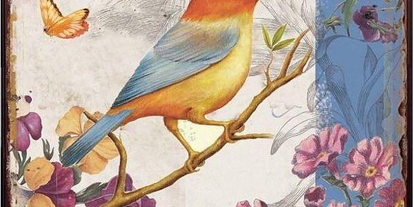 Obraz ptáček HA672652