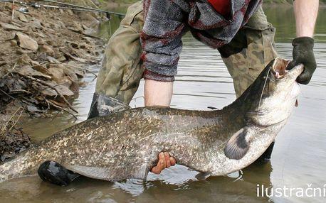Pojďme na ryby - rybolov sumců