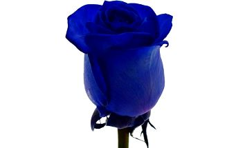 Kytice růží, která řekne vše za vás!