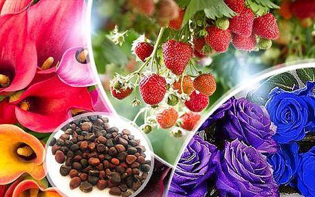 Semínka - unikátní růže nebo popínavé jahody do Vaší zahrady! 200 ks semen včetně poštovného!