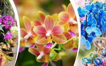 19. 3. 2016 Drážďany - výlet autokarem na 1 den s návštěvou jedné z nekrásnějších a největších evropských přehlídek orchideí. Jarní veletrh před Velikonocemi nabízí tyto oblasti: zahrada, umělecká řemesla, chovatelství, aktivity pro rodiny a trávení volné