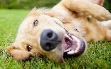 Jeden den v psí školce Dogpark